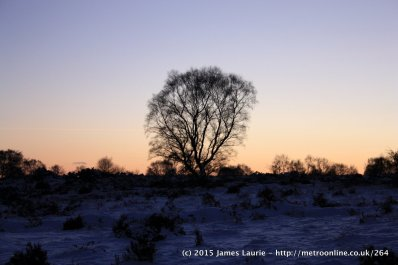 Sunset On Cannock Chase Preview