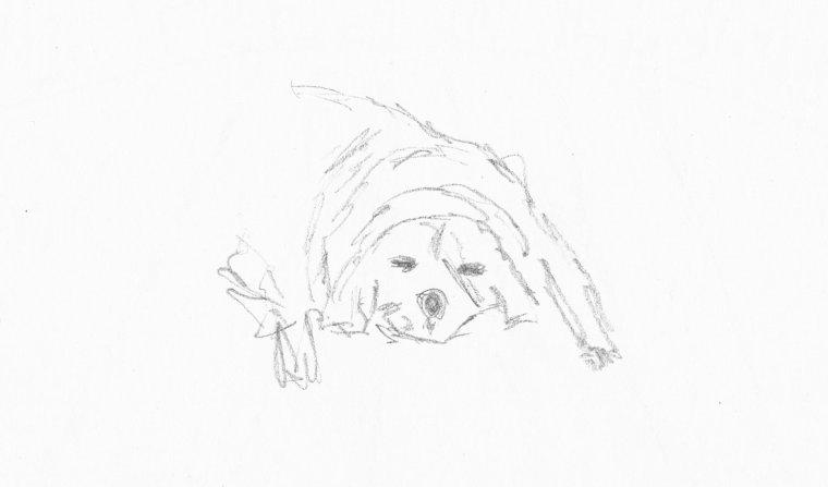 20151001 - 2 Dog